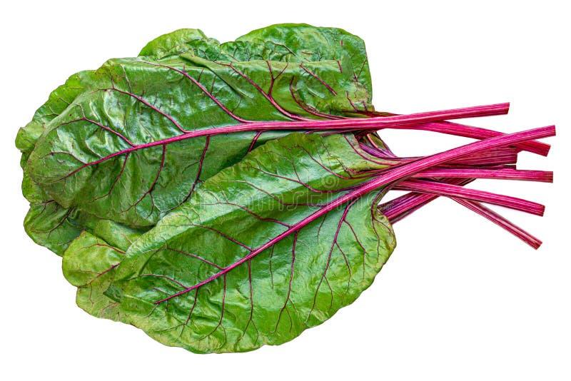 Ruibarbo aislado La verdura o el ruibarbo del Rheum con las hojas y los tallos se cierra para arriba imagenes de archivo