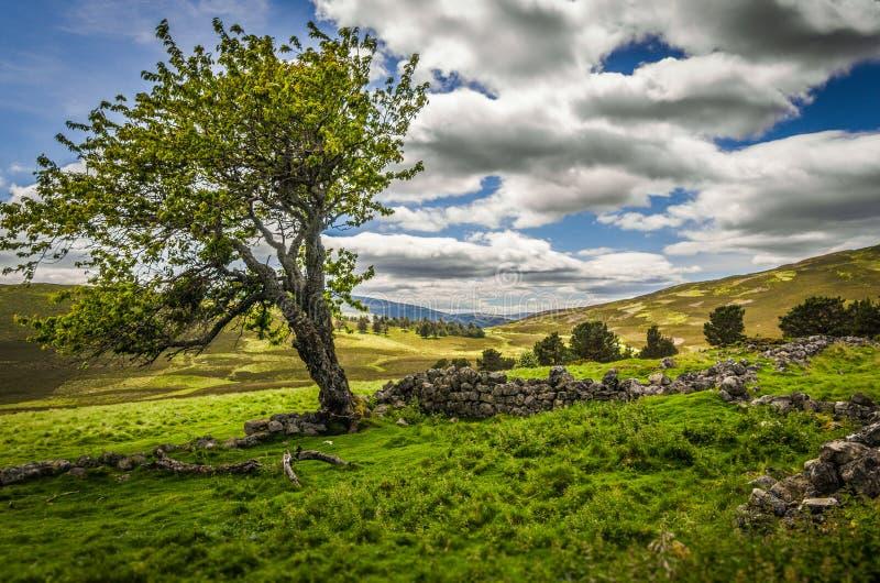 Ruinas árbol y del cortijo viejos veraniegos de Glenfenzie en Escocia fotografía de archivo