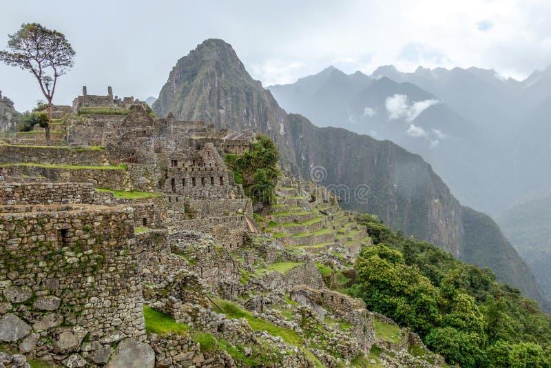 Ruinas abandonadas de la ciudadela Incan de Machu Picchu, del laberinto de terrazas y de las paredes que suben de la maleza grues fotos de archivo