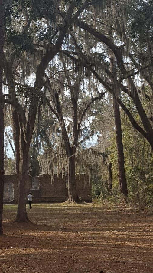 Ruinas del gato atigrado del molino de azúcar de McIntosh fotografía de archivo