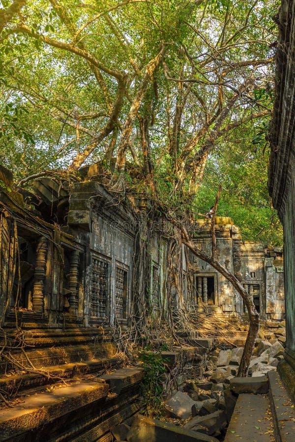 Ruinas del templo de Beng Mealea cubiertas en árboles y raíces en el jungl imágenes de archivo libres de regalías