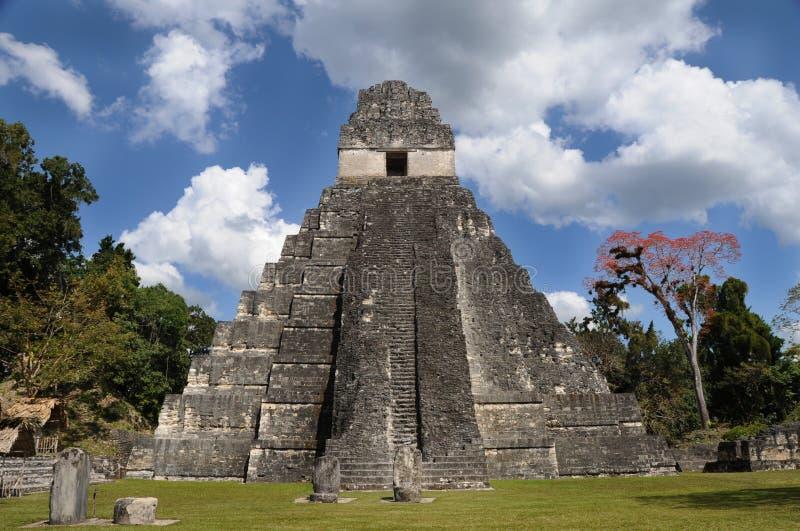 Ruinas tikal mayas, Guatemala foto de archivo libre de regalías