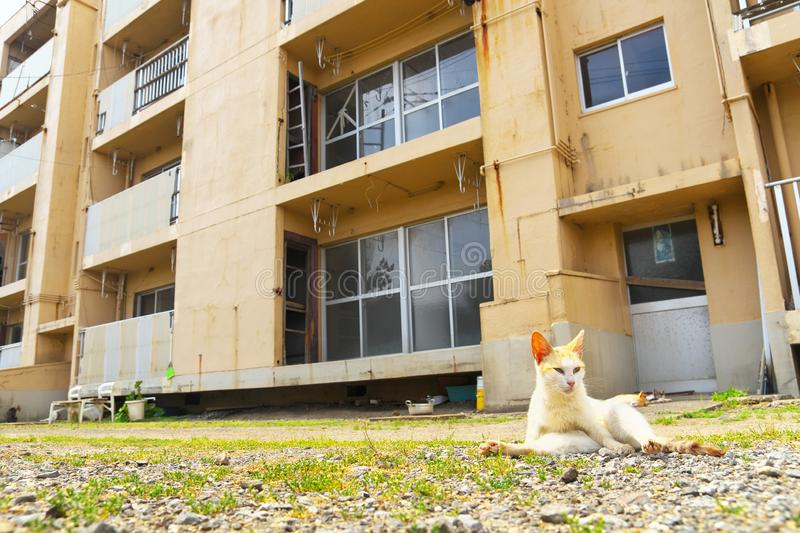 Ruined apartment building with a cat in Ikeshima, Nagasaki, Japan. Ikeshima was coal mine island in former days stock images