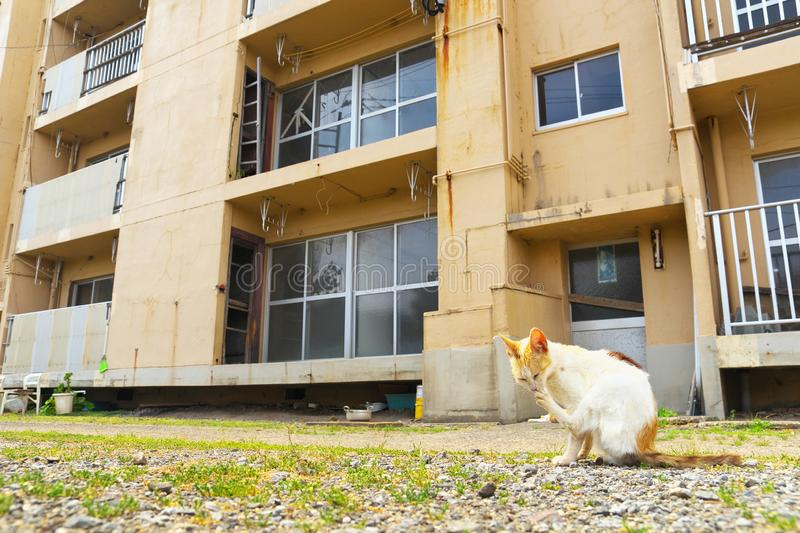 Ruined apartment building with a cat in Ikeshima, Nagasaki, Japan. Ikeshima was coal mine island in former days royalty free stock photos