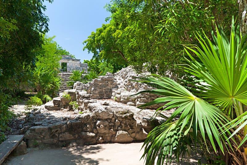 Ruines archéologiques dans la jungle photo libre de droits