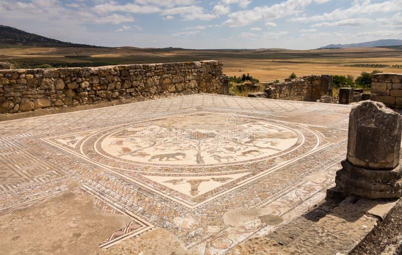 Ruines chez Volubilis Maroc photographie stock