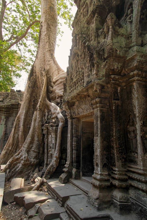 Ruines d'Angkor Vat dans la jungle image libre de droits