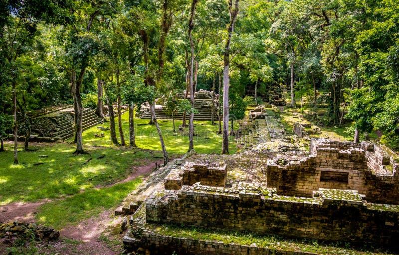 Ruines de la zone résidentielle de ruines maya - site archéologique de Copan, Honduras photos stock
