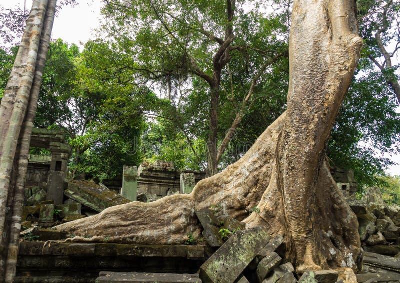 Ruines de temple antique de Beng Mealea au-dessus de jungle, Cambodge image libre de droits