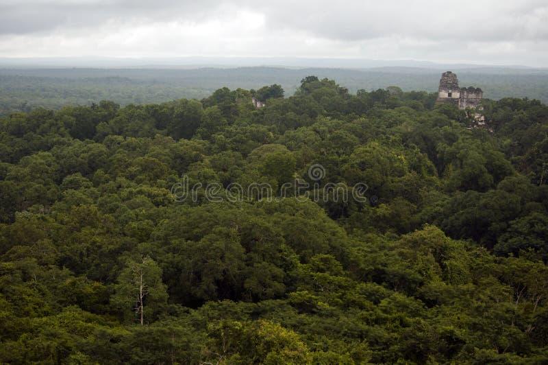 Ruines de Tikal parmi les jungles de plaine du Guatemala photos libres de droits