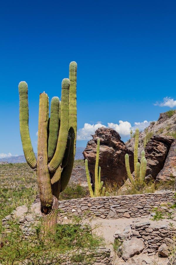Ruines de ville Quilmes de pré-Inca photo stock
