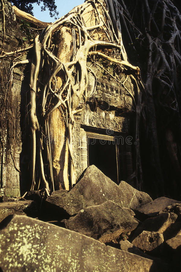 Ruines envahies Cambodge images libres de droits