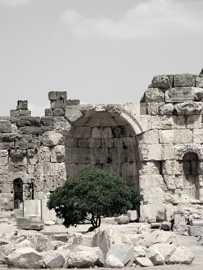 Ruines Et Arbre Images libres de droits