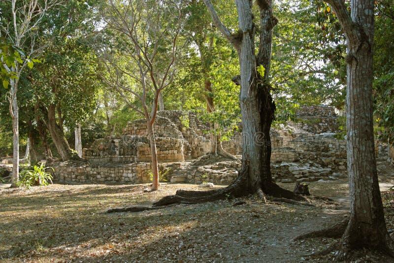 Ruines maya de Chicanna images stock