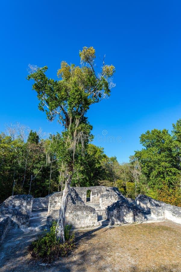 Ruines maya et arbres image libre de droits