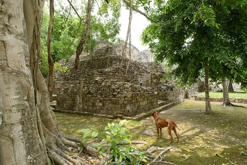 Ruines se tenantes prêt de Maya de chien au Mexique image libre de droits