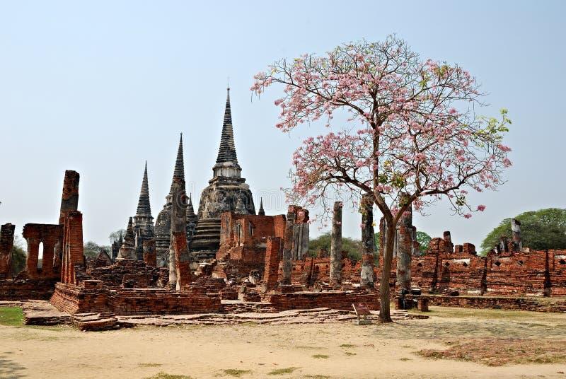 Ruines thaïes antiques de temple avec l'arbre photos stock
