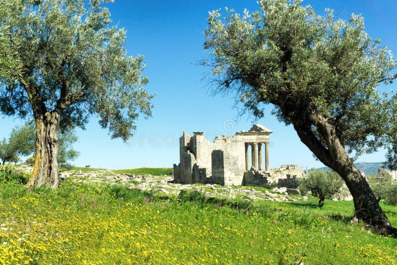 Ruins amongst Dougga's olive trees, Tunisia. Landscape of the ruins amongst olive trees in Dougga, Tunisia royalty free stock photography