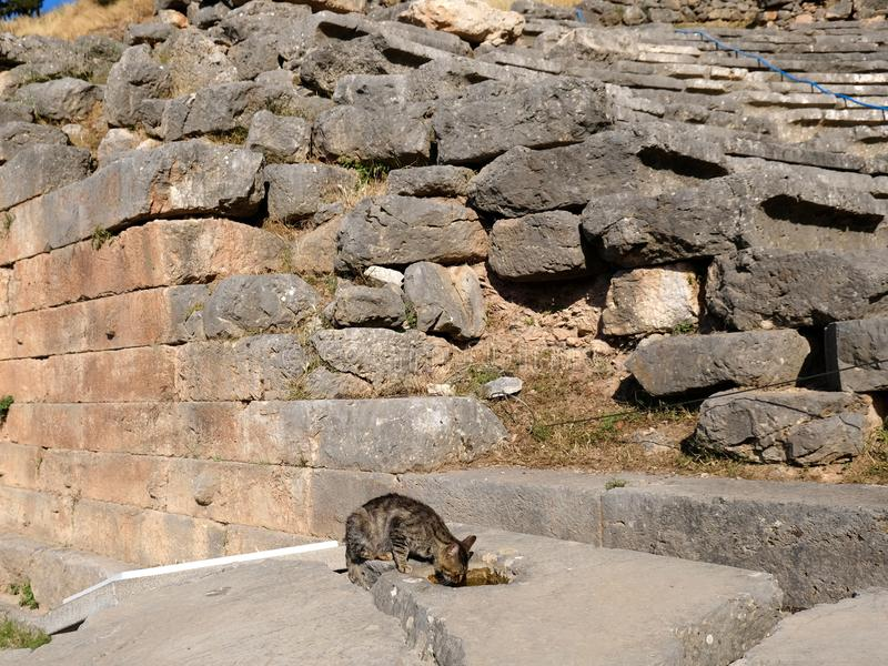 Ancient Greek Stone Wall and a Grey Tabby Cat, Sanctuary of Apollo, Mount Parnassus, Greece. The ruins of an Ancient Greek stone block wall, polygonal masonry royalty free stock images