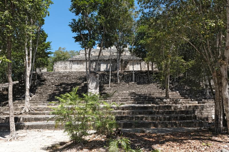 The ruins of the ancient mayan city of calakmul, campeche, mexico.  royalty free stock images
