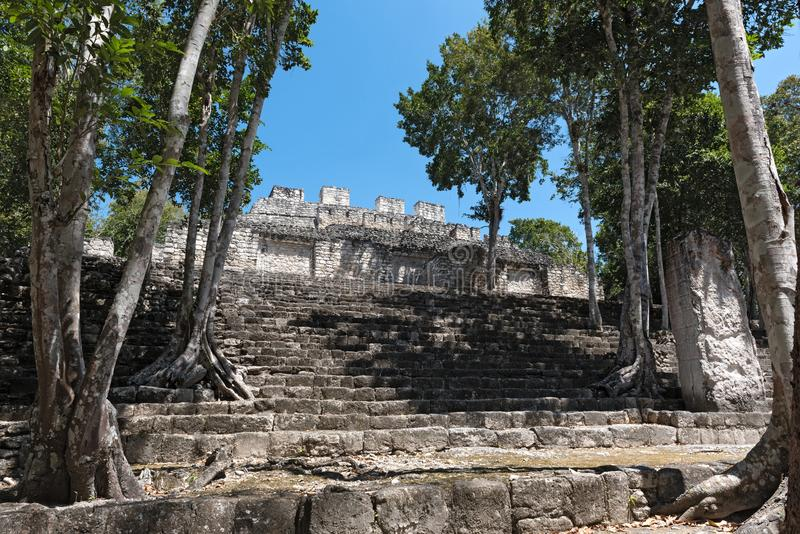 The ruins of the ancient Mayan city of calakmul, campeche, Mexico royalty free stock photo