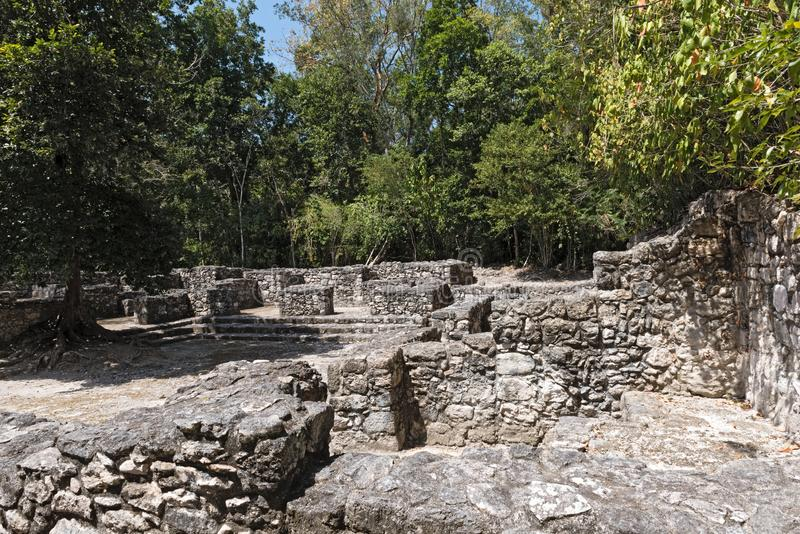 The ruins of the ancient Mayan city of calakmul, campeche, Mexico.  stock images