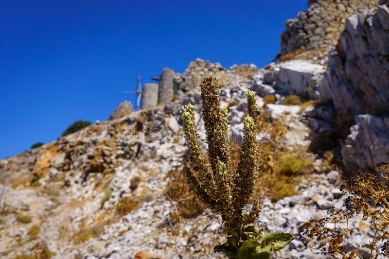 Ruins of encient windmills built in 15th century. Lassithi Plateau, Crete, Greece. Most typical characteristic of the Plateau.In the past they numbered royalty free stock image