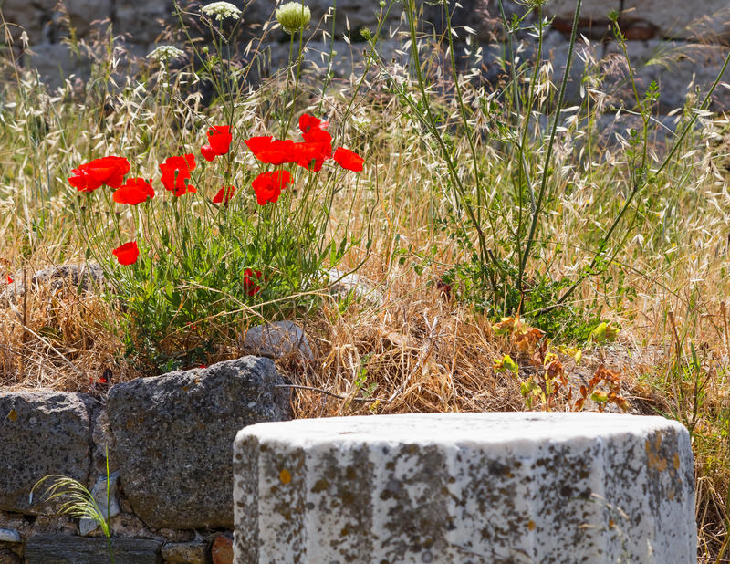 Download Ruins On Kos, Greece Stock Photo - Image: 25676340
