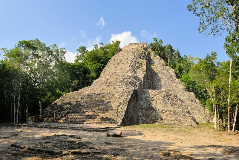 Ruins of Mayan pyramid in jungle, Coba, Yucatan royalty free stock image