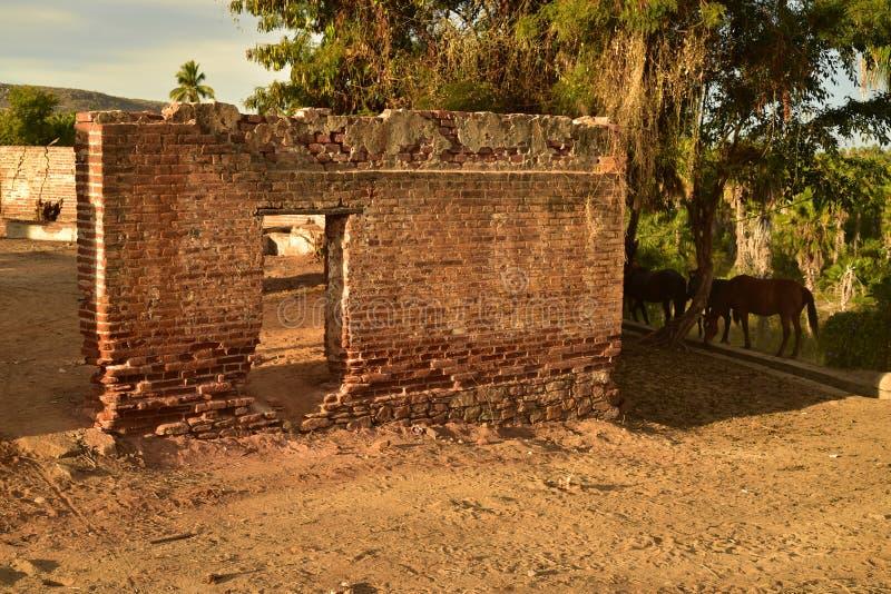 Ruins of old brick sugar mill in Todos Santos, Baja, Mexico. Old brick ruins of abandoned sugar mill with wild horses in the small town of Todos Santos, Baja royalty free stock photos
