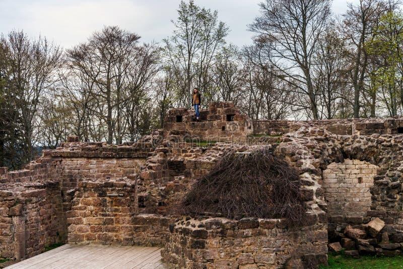 Ruiny średniowieczny grodowy Wangenbourg na wierzchołku wzgórze, Alsace, obraz stock