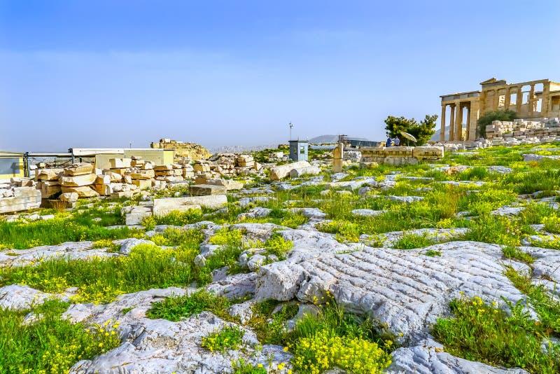 Ruiny świątyni Erechtheion Wildflowers Żółty akropol Ateny Gre zdjęcia stock