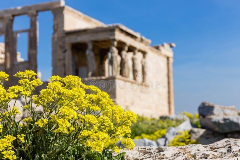 Ruiny antyczna świątynia na akropolu wzgórzu zdjęcie royalty free