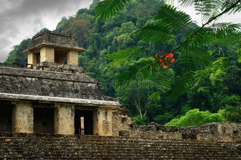 Ruiny antyczny Majski miasto Palenque, Meksyk obrazy stock