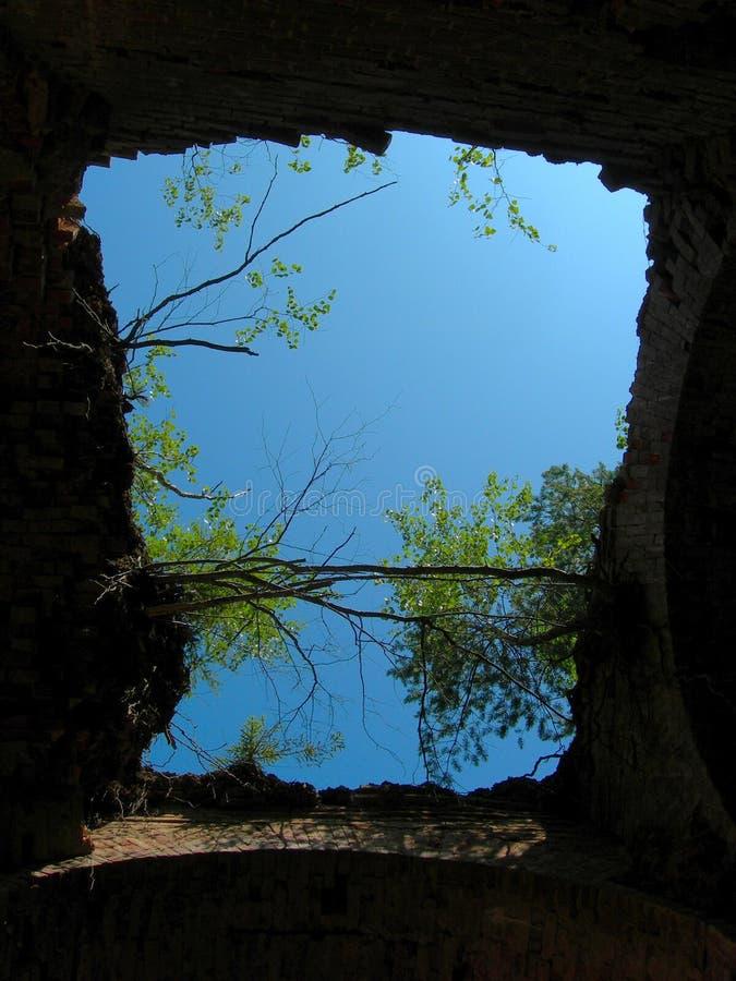 Ruiny dach świątynia, przerastający z drzewami, inside widok obraz royalty free