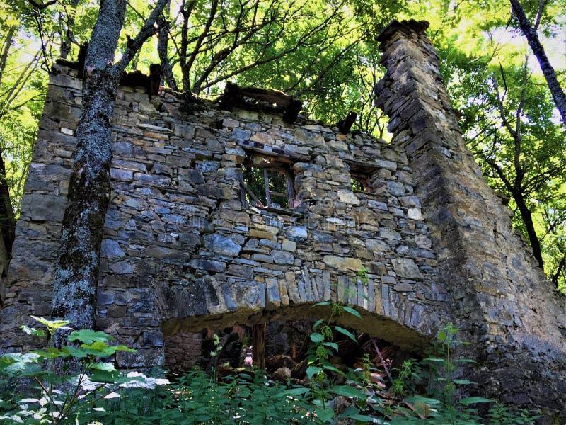 Ruiny, las i czas, fotografia stock