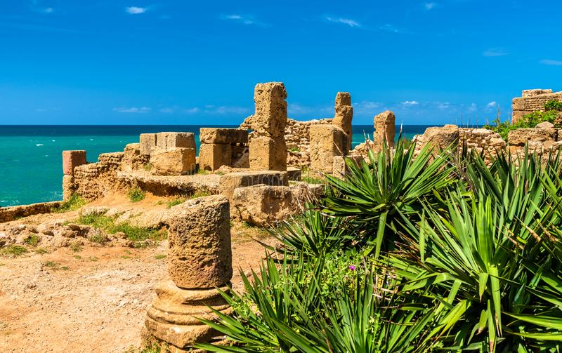 Ruiny Tipasa, Romański colonia w Algieria, afryka pólnocna obrazy royalty free