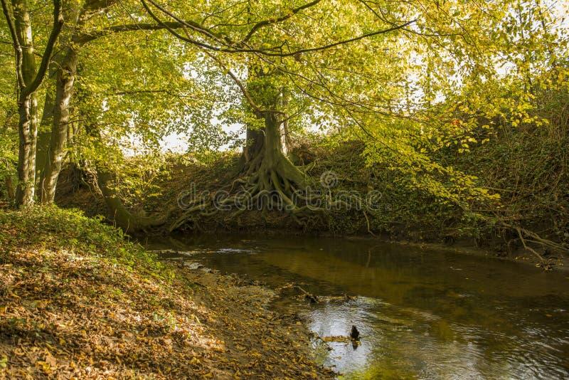 Ruisseau aux Pays-Bas photo libre de droits