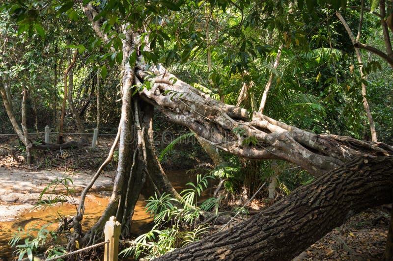 Ruisseau chez Kbal Spean photos libres de droits