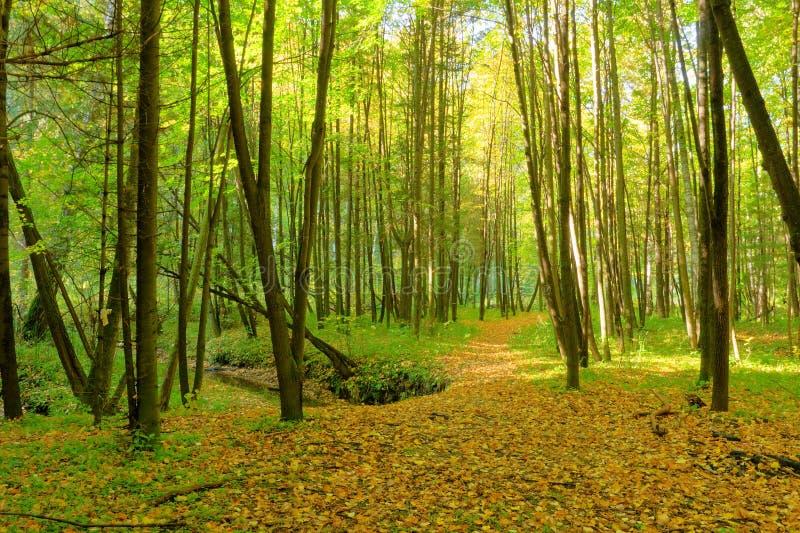 Ruisseau dans la forêt image stock