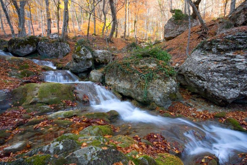 Ruisseau dans la forêt d'automne photographie stock