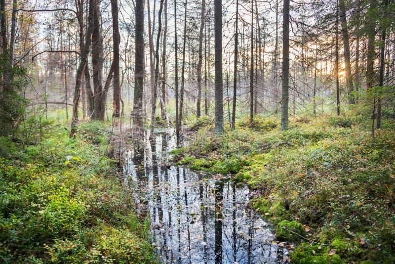 Ruisseau dans la forêt d'automne photos libres de droits