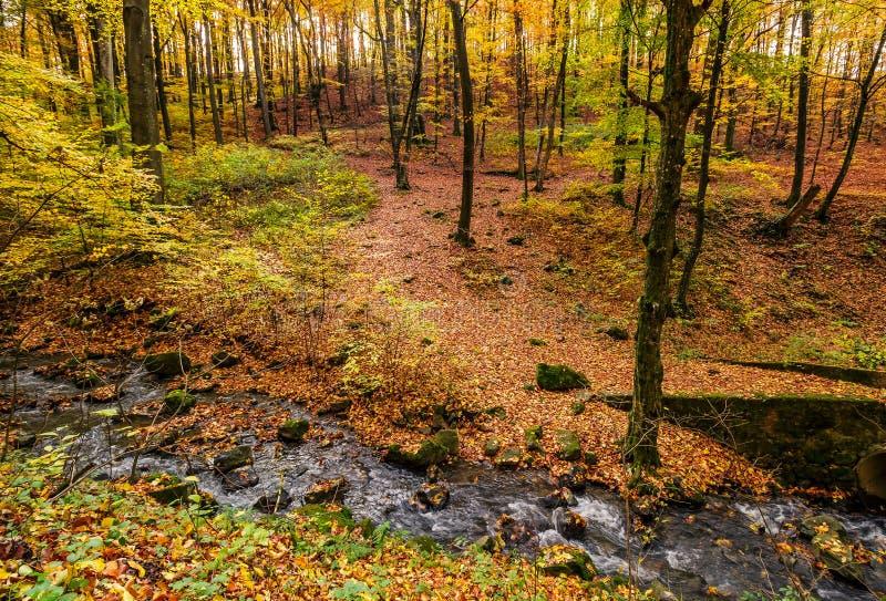 Ruisseau dans la forêt d'automne sur le flanc de coteau photographie stock libre de droits