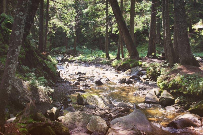 Ruisseau dans les montagnes Courant dans la belle nature de forêt photos stock