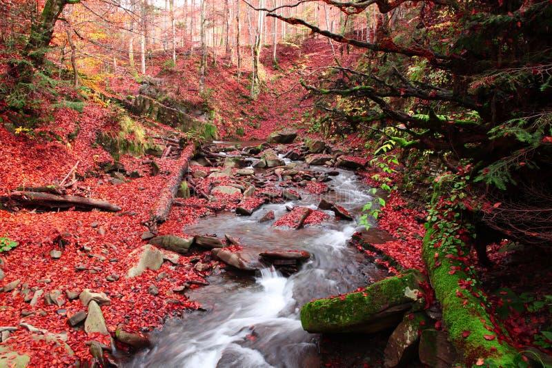 Ruisseau dans une forêt de hêtre en automne images stock