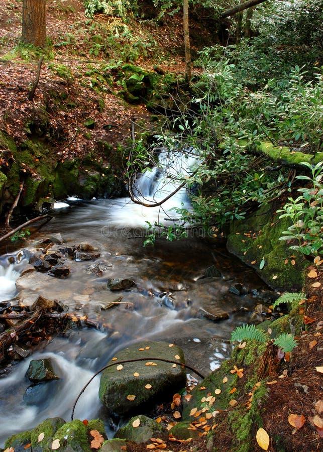 Ruisseau de bouillonnement dans les bois photographie stock