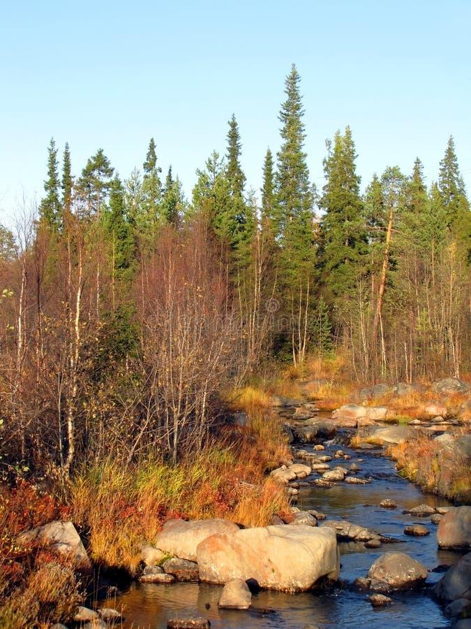 Ruisseau de forêt en automne au coucher du soleil images stock