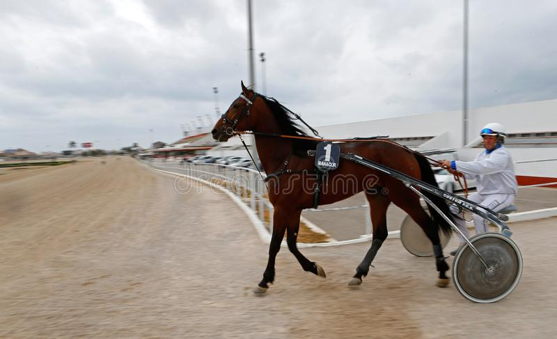 Ruiter die renbaan wijd ingaat vóór een nukkig ras van de paarduitrusting in panning van de palmade Mallorca renbaan royalty-vrije stock afbeeldingen