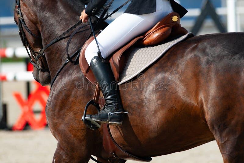 Ruiter op een sportief paard royalty-vrije stock fotografie