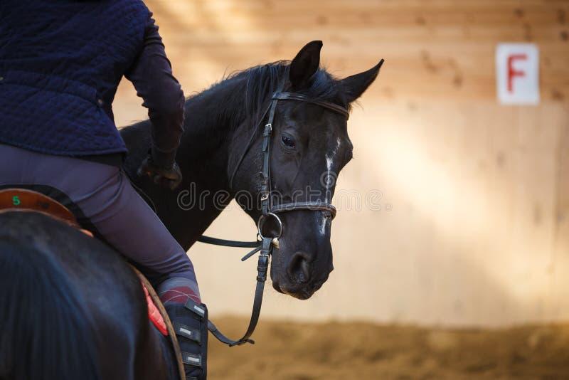 Ruiter op het paard stock fotografie